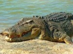 Police fears that a young girl been taken away by crocodile