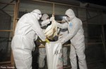 Human transmissions of H7N9 in China 'sporadic'
