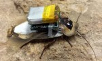 Chinese students created mind controlling device for cockroaches
