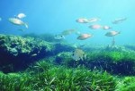 Protection for seagrass meadows