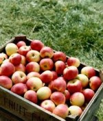 The Nutritional Benefits of Apples