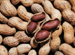 Preventing Peanut allergies